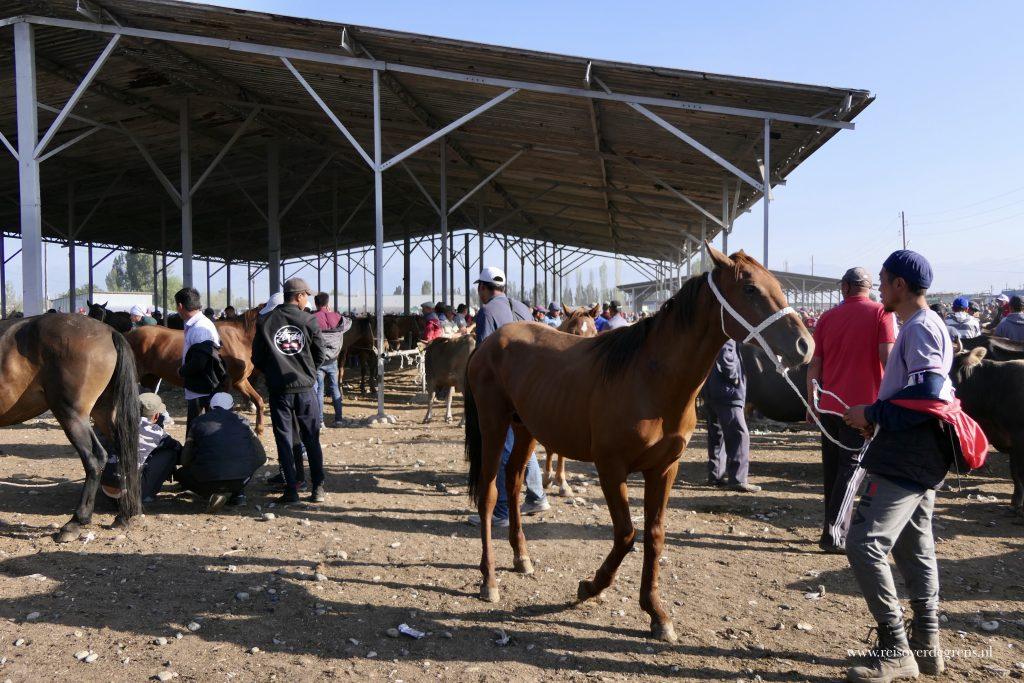 Jonge paarden op de veemarkt in Karakol
