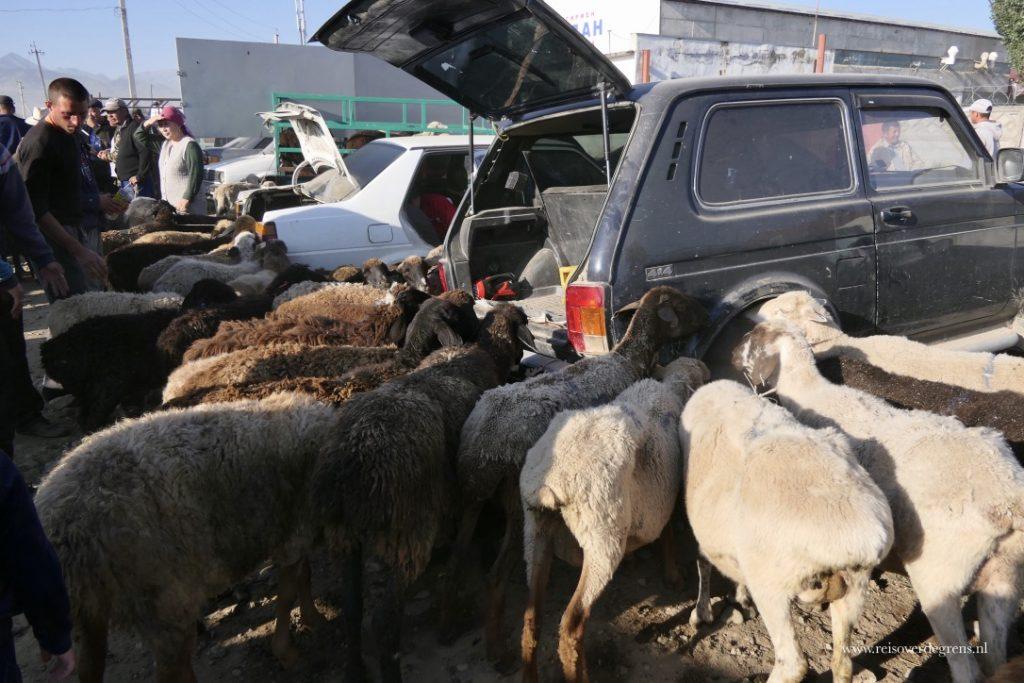 Allemaal schapen op de veemarkt in Karakol